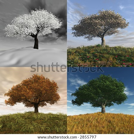four seasons time lapse - stock photo