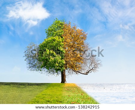 Four seasons tree time passing concept - stock photo