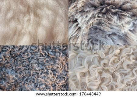 four sheepskin backgrounds - stock photo