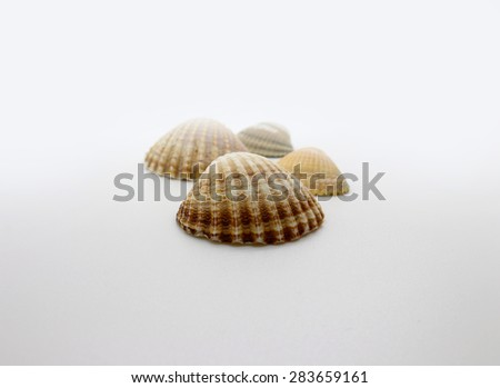 Four shells on the white background.