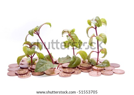 Four small Fuchsia plants are growing from a ground made of copper coins.  A metaphor for financial growth? - stock photo