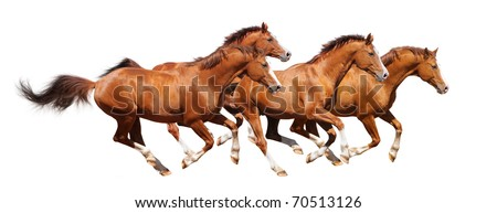 Four sorrel horses gallop - isolated on white - stock photo