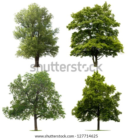 Four Trees isolated on white background - stock photo