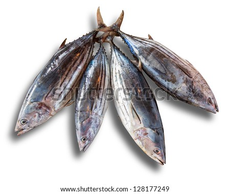 Four tuna on a white background with a shadow - stock photo