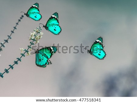 stock-photo-four-turquoise-beautiful-but