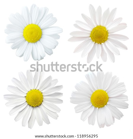 four white flowers