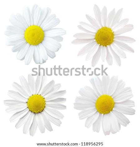 four white flowers - stock photo