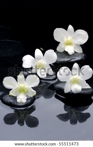 Four white orchid flower with reflection