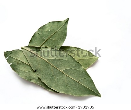 Four whole dried sweet basil, Ocimum basilicum  leaves isolated on white with slight shadow. The leaves are criss crossed on top of each other. Basil has been studied for potential health benefits.