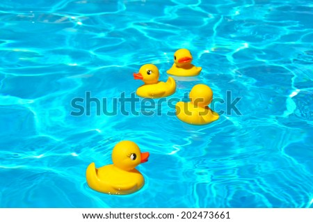 Four yellow squeaky ducky in the pool - stock photo
