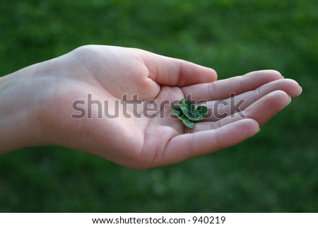 Fourleafed clover, symbol of luck in female hand - stock photo