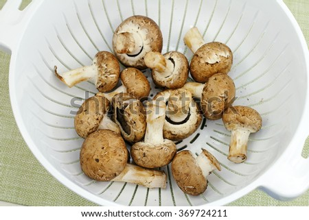 Fourteen crimini mushrooms washed and drying in a white plastic colander on a green placemat. Freshly washed raw crimini mushrooms drying in a colander before cooking.