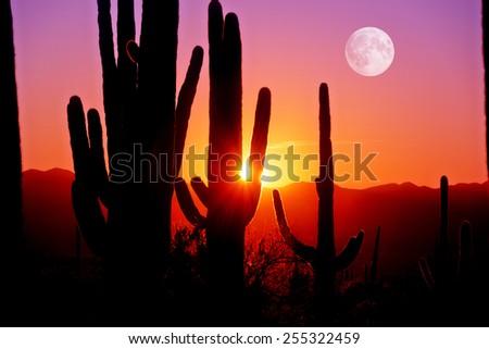 Fourth Sunset at Saguaro National Park near Tucson Arizona. - stock photo