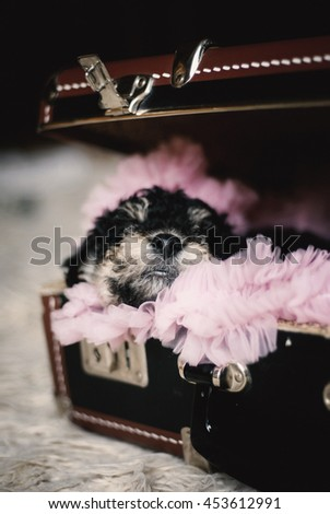 Fox terrier puppy sleep in a vintage suitcase. - stock photo