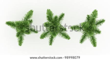 foxtail palm isolated over white - stock photo