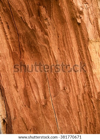 Fracture of red timber demonstrates the pith and the heartwood - stock photo