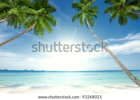 fragment like View of nice tropical  coast with some palm - stock photo