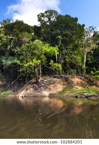 Fragment of a shore with dense forest in Amazon river, Manaus, Brazil - stock photo