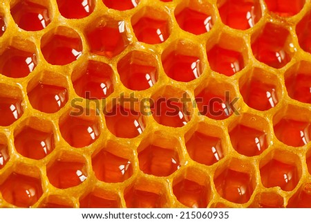 Fragment of honeycomb with cells full of honey - stock photo