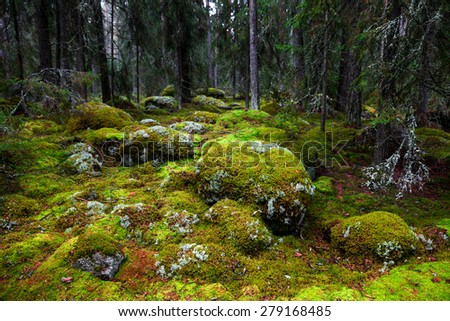 fragment of karelian forest - stock photo