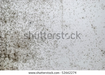 Fragment of moldy wall for grunge background - stock photo