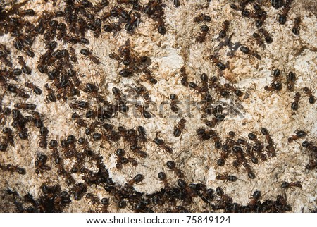 Fragment of the big ant hill - stock photo