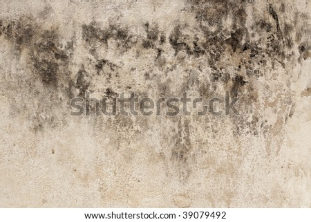 Fragment of the wall with mold - stock photo