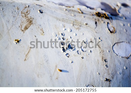 Fragments of an old, abandoned, rusty, romanian car - paint and rust texture  - stock photo