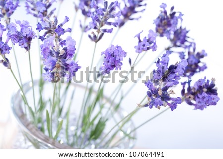 Fragrant bouquet of lavender flowers in glass vase