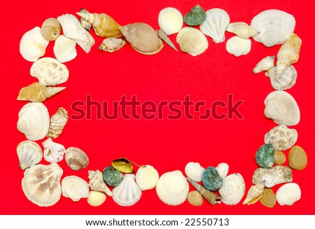 frame arranged from sea shells - stock photo