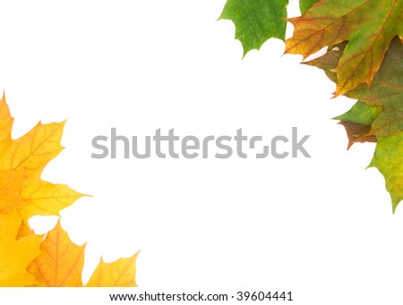 Frame built from the autumn leaves of different colors