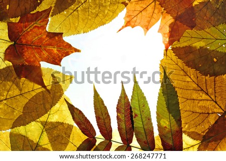 frame composed of colorful autumn leaves over white  - stock photo