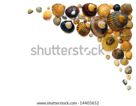 Frame composition of assorted sea shells over white background - stock photo