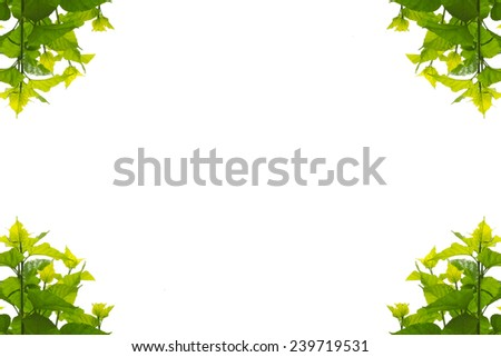 frame corner green leaves mulberry on white background - stock photo