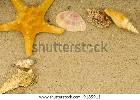 Frame corner with many different seashells. - stock photo