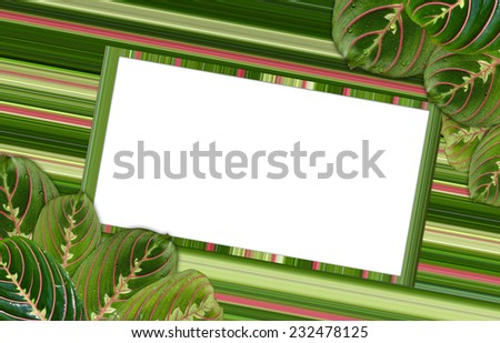 Frame for inscriptions surrounded by leaves maranta - stock photo