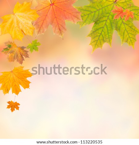 Frame from autumn leaves on colorful background