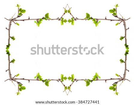 Frame Branches Green Leaves Stock Photo (Royalty Free) 384727441 ...