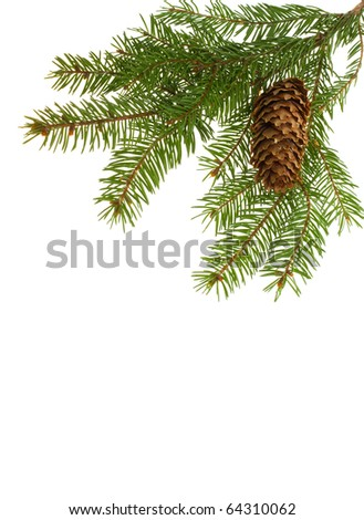 frame from fir branch and cone - stock photo