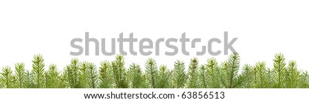 frame from fir tree branches - stock photo