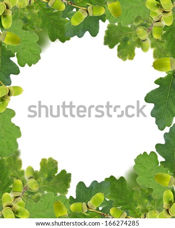frame from green acorns and leaves isolated on white background