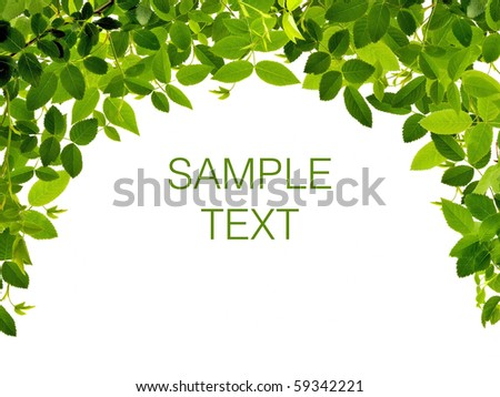 Frame from green leafs isolated on white background with space for text. - stock photo