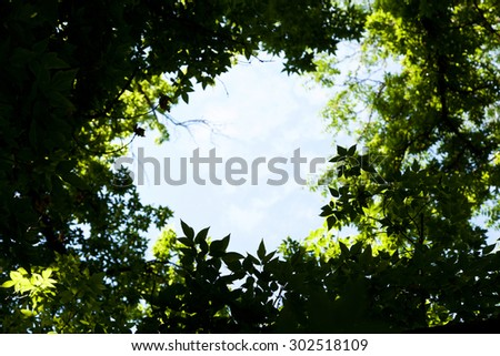 Frame from the leaves of trees - stock photo
