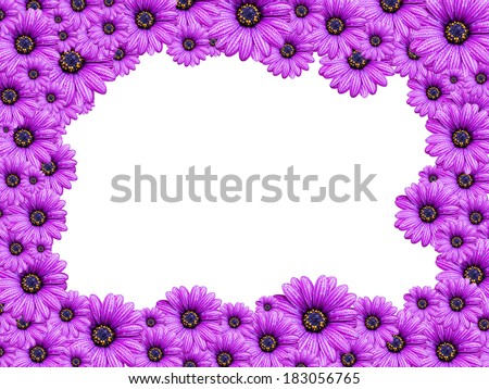 frame from Violet Senecio flowers isolated on white background - stock photo