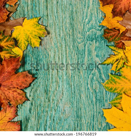 Frame from vivid colorful autumn leaves on the grunge wooden cyan desk, vintage seasonal background