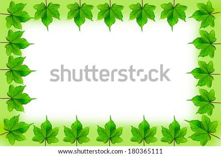 Frame green leaf  isolated on white background.