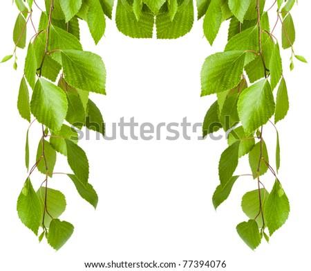 frame leaves - stock photo