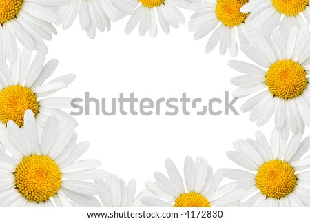 Frame made from camomiles over white background