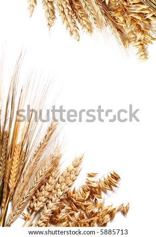 Frame made of different wheats isolated on white. - stock photo