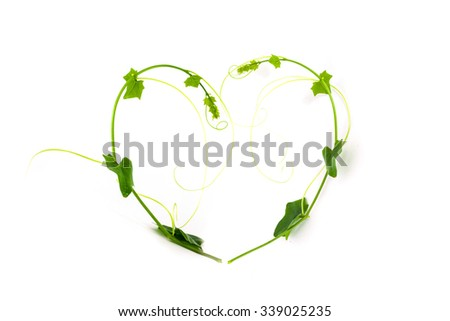 Frame made of Green climbing plant, shape heart , isolated on white background - stock photo